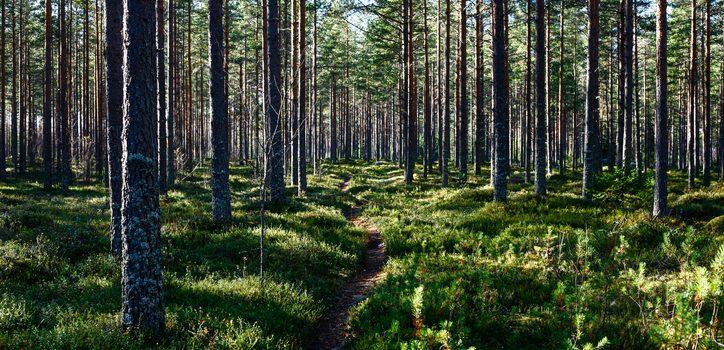7f836ddc Så köper du skogsmark - Skogshistoria.nu