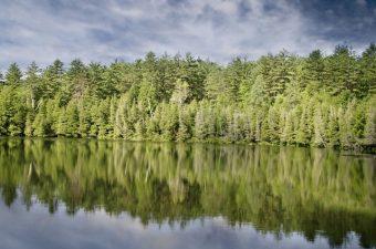En göl i skogen